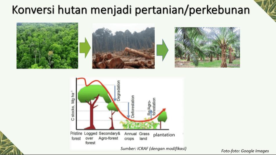 Pengelolaan Hutan Lestari dan Lanskap - Konversi Hutan Menjadi Perkebunan